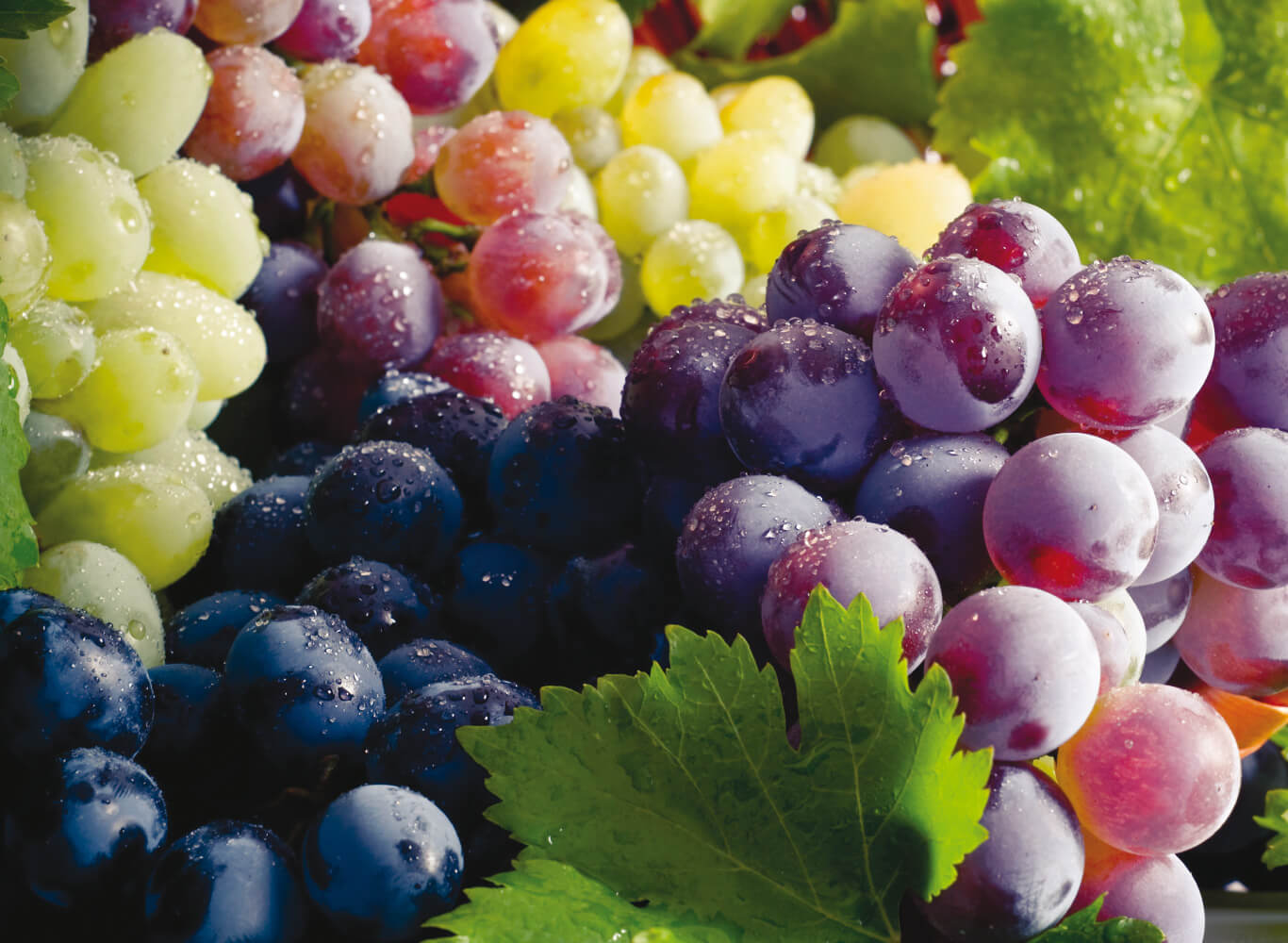 Pinnacle Wine Grapes